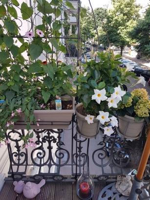My Balkony